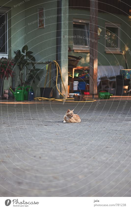 hausherr Haus Bauwerk Gebäude Mauer Wand Tier Haustier Katze 1 niedlich Farbfoto Außenaufnahme Menschenleer Textfreiraum unten Tag