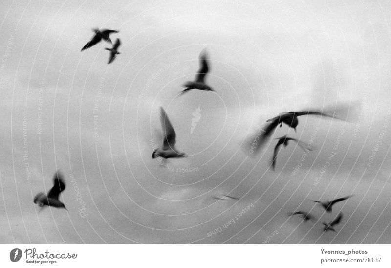fly away with me... Vogel Möwe Wolken Geschwindigkeit dunkel grau Trauer schwarz weiß Ferne Sehnsucht Stimmung Meer Licht Horizont Vogelschwarm Himmel möven