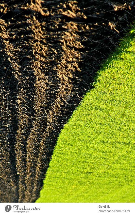 mother earth meets meadow Feld Erde Furche Pflug pflügen Streifen braun dreckig Sauberkeit schmal saftig Gras Wiese grün grasgrün Geschwindigkeit berühren