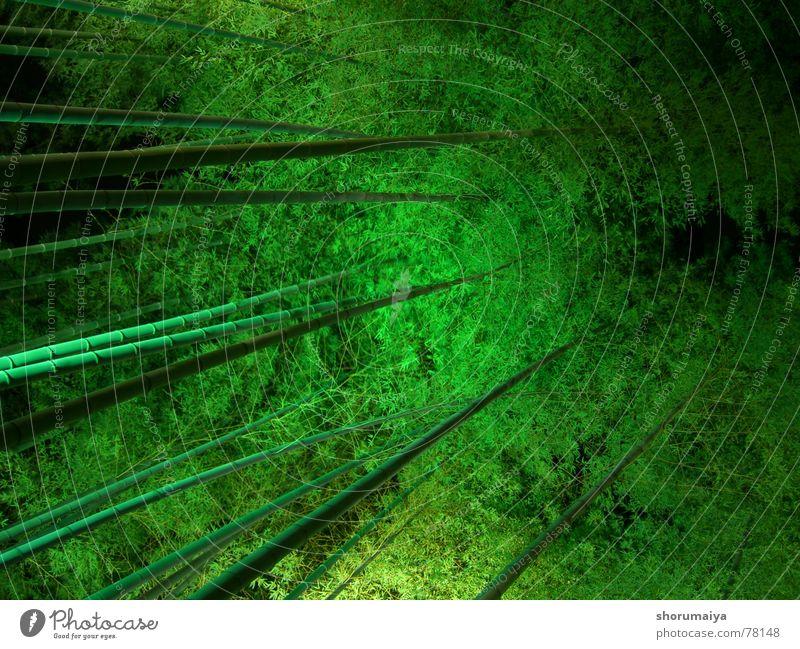 take Baum grün schwarz Wald Nachthimmel Japan Baumkrone Bambusrohr Kyoto