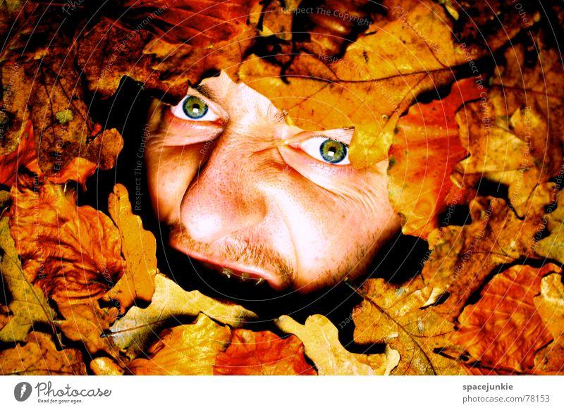 Ein herbstliches Schreibild (3) Mann Natur alt Gesicht Blatt Herbst Angst schreien Jahreszeiten gefangen Freak Herbstlaub mögen beerdigen