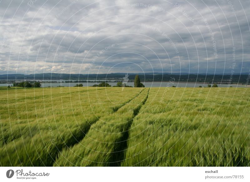 Seerhein Natur Wasser Himmel grün ruhig Wolken Ferne Erholung grau Landschaft Feld Wind Getreide Traktor Nationalpark friedlich