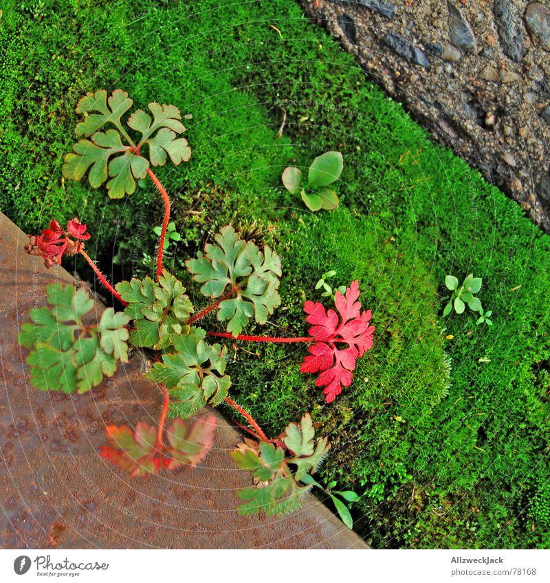 Dreiklang Pflanze Jungpflanze Stahl Beton grün Herbst diagonal herbstlich Natur Unkraut Heilpflanzen Moos