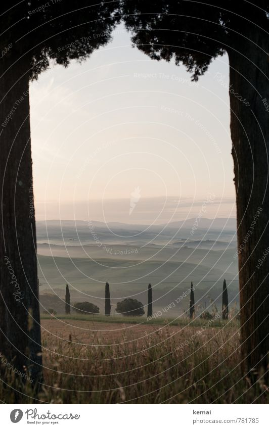 Tor zur Toskana Himmel Natur Ferien & Urlaub & Reisen schön grün Sommer Baum ruhig Landschaft Ferne Wiese Freiheit Stimmung Nebel Sträucher Tourismus