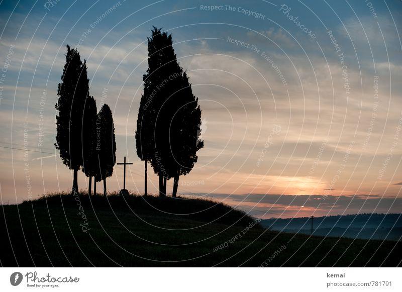 Weihnachtsbäume Himmel Natur Ferien & Urlaub & Reisen Pflanze Sommer Sonne Baum Landschaft ruhig Wolken schwarz Umwelt Feld Nebel Tourismus frisch