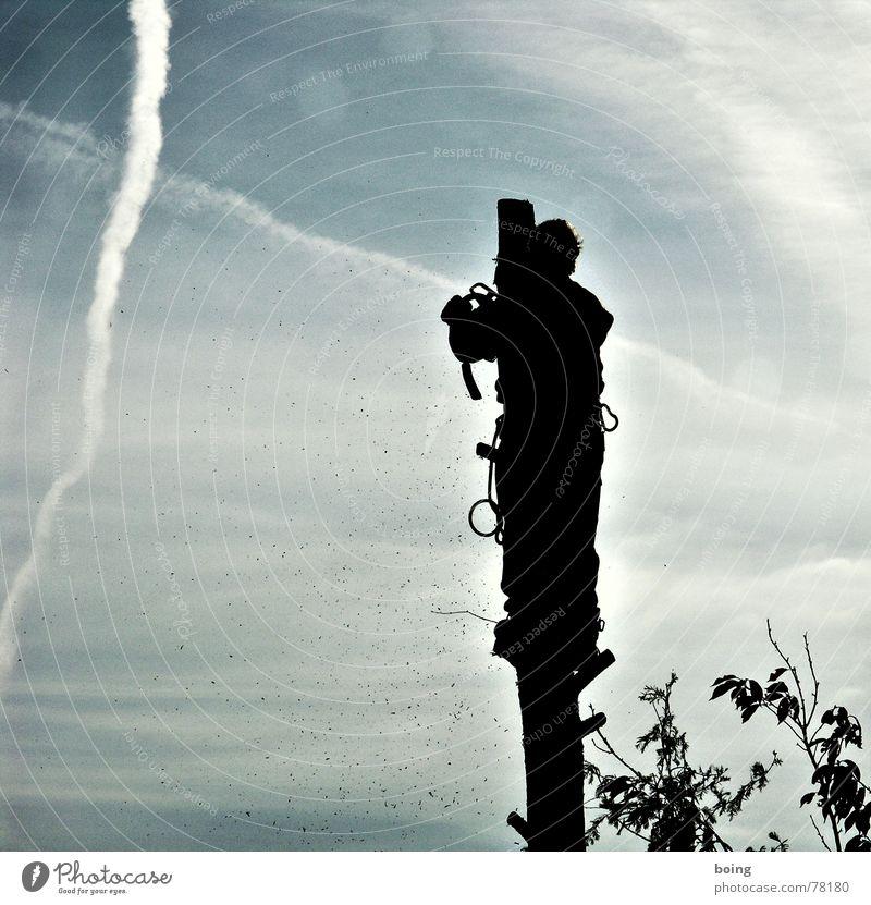 Herr Baumann reduziert einen Baum der Zeit seit oben Baum gefährlich Klettern Bergsteigen Versicherung Kapitalwirtschaft Geäst Absicherung Zweige u. Äste Gärtner matt Kondensstreifen Freeclimbing Säge Baseballmütze kürzen