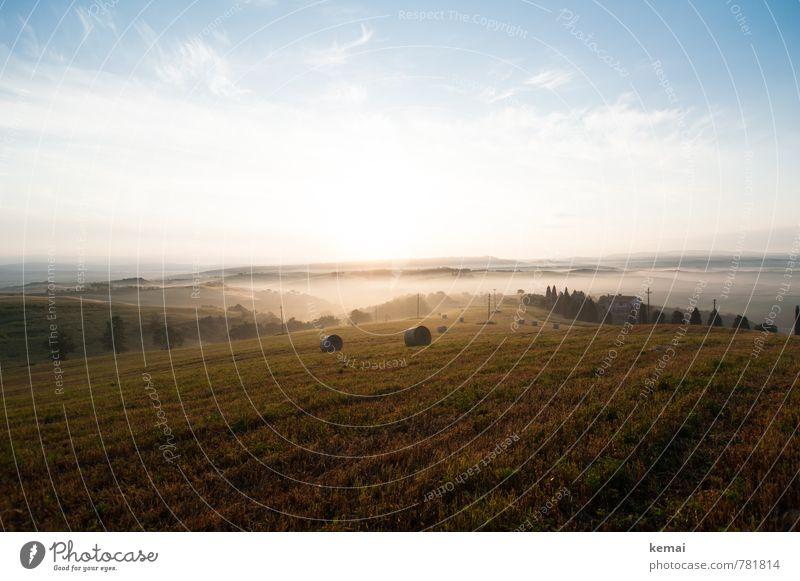 Frühnebel Umwelt Natur Landschaft Luft Himmel Wolken Sonnenaufgang Sonnenuntergang Sonnenlicht Sommer Schönes Wetter Nebel Baum Grünpflanze Nutzpflanze Zypresse