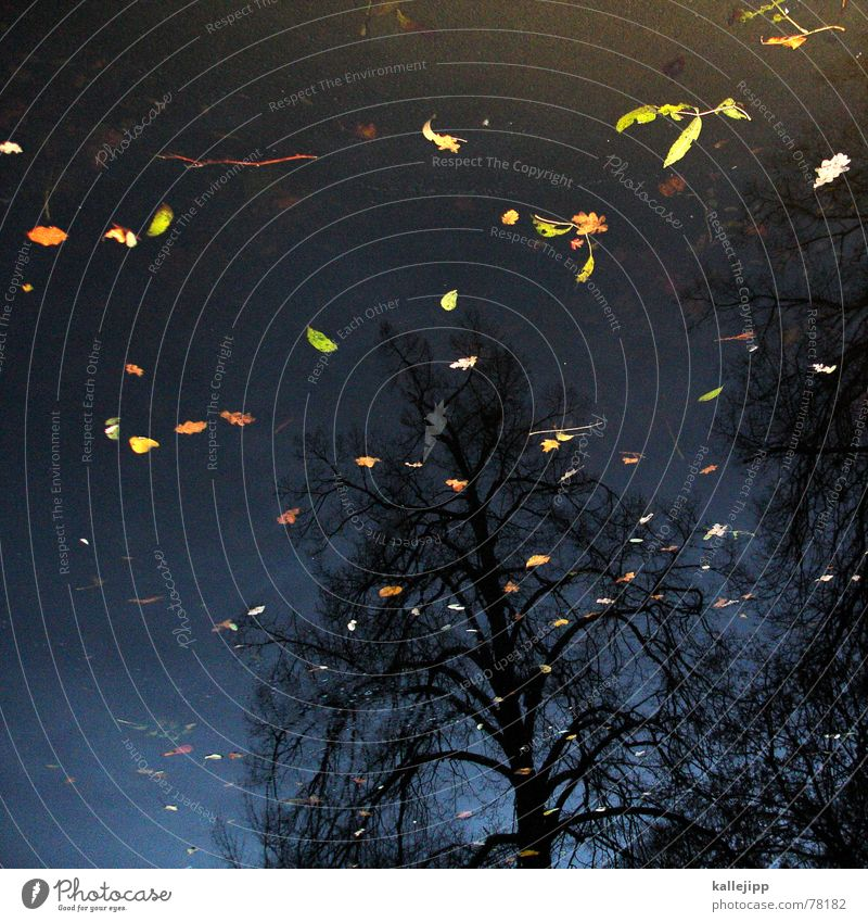 killesbergbaby Himmel Baum Blatt Wolken kalt Herbst Tod See Park Wärme fliegen verfaulen Physik Sturm Stuttgart November