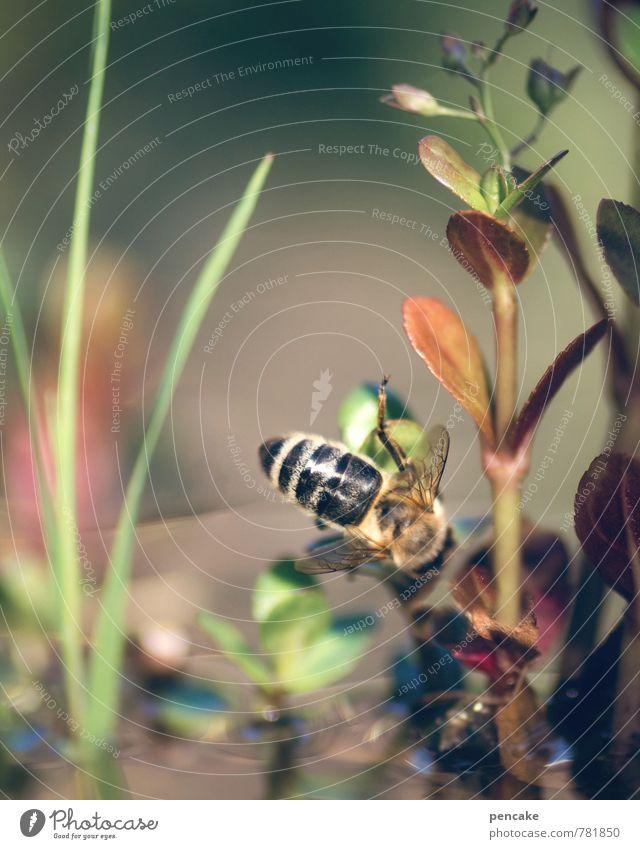 teichträume | kopfüber Natur Pflanze Wasser Sommer Landschaft Tier Idylle ästhetisch genießen Schönes Wetter Urelemente entdecken Biene Teich kopfvoran