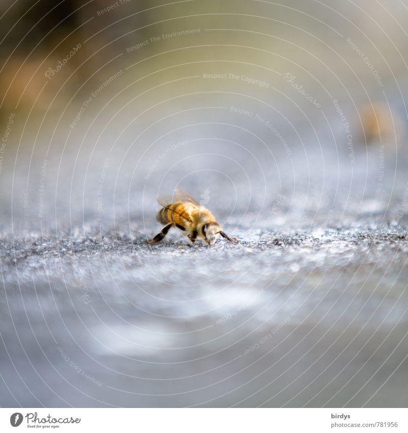 Biene Natur Tier klein Stein ästhetisch positiv