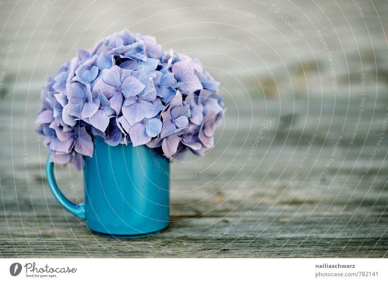 Hortensien Tasse Becher Stil Garten Tisch Blume Blüte Holz alt retro weich blau braun violett Frühlingsgefühle Romantik rein Hydrangea horstensienblüte