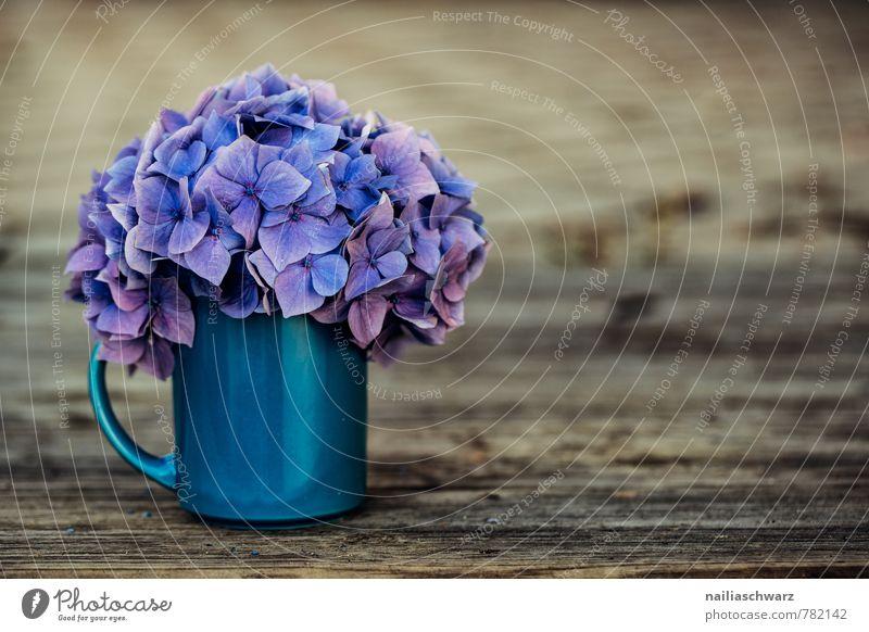 Hortensien Tasse Becher Stil Garten Tisch Blume Blüte Holz alt natürlich retro schön weich blau braun violett Frühlingsgefühle Warmherzigkeit Romantik Duft