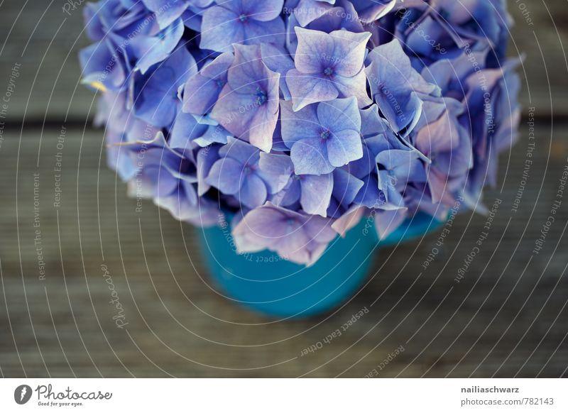 Hortensien Tasse Becher Stil Garten Tisch Blume Blüte Holz alt retro weich blau braun violett Glück Fröhlichkeit Frühlingsgefühle Sympathie Romantik Farbe