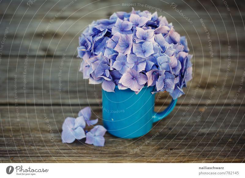 Hortensien Tasse Becher Stil Garten Tisch Blume Blüte Holz alt Blühend Duft schön natürlich retro blau braun violett Frühlingsgefühle Romantik Hydrangea