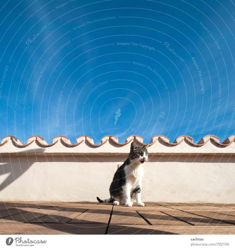 Dachhase Himmel Sommer Wärme Tier Haustier Katze 1 sitzen Dachterrasse Holzfußboden Dachziegel Sonnenbad Schatten blau Mallorca mediterran Hauskatze Farbfoto