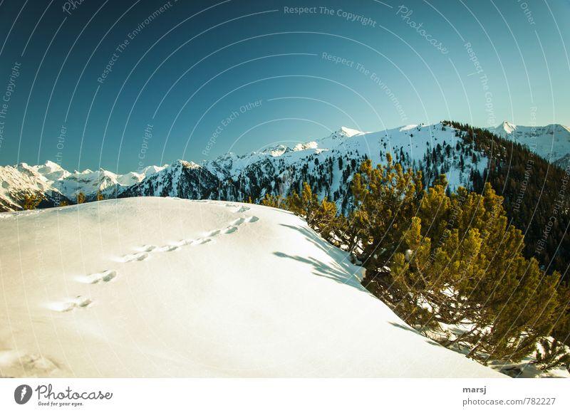 Spuren im Schnee Ferien & Urlaub & Reisen Tourismus Ausflug Winter Winterurlaub Berge u. Gebirge wandern Natur Landschaft Himmel Wolkenloser Himmel