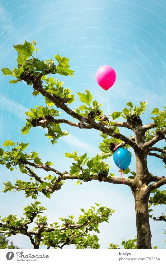 Luftballonbaum die Zweite Himmel Frühling Sommer Schönes Wetter Baum Platane leuchten oben positiv blau grün rosa Freude Lebensfreude Kindheit Blatt ästhetisch