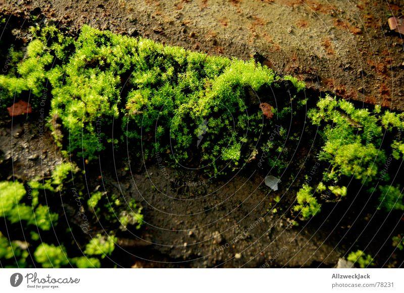 Mooswuchs grün Außenaufnahme Bodenbelag büschel Rost Stein Natur