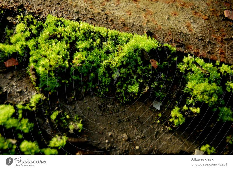 Mooswuchs Natur grün Stein Bodenbelag Rost