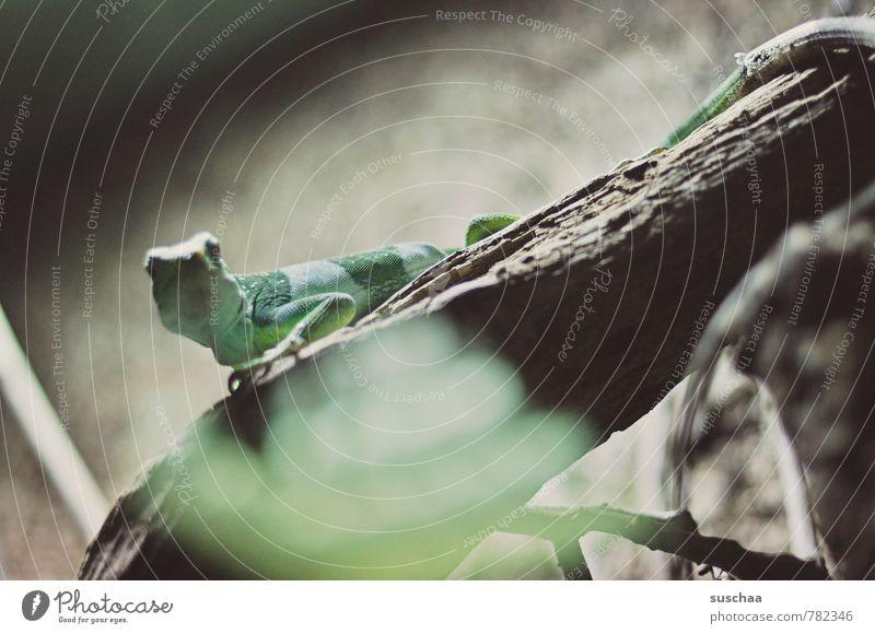 noch so'n kleines grünes tierchen Tier Zoo 1 exotisch Neugier niedlich Echse Reptil gestreift Baumstamm Gedeckte Farben Außenaufnahme Textfreiraum oben