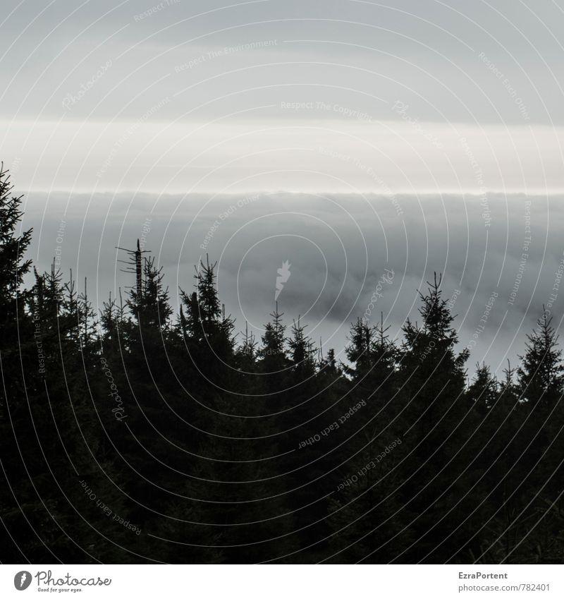 schwarzer Harzwald Umwelt Natur Landschaft Himmel Wolken Horizont Sonne Sonnenlicht Frühling Herbst Winter Klima Klimawandel Wetter schlechtes Wetter Nebel