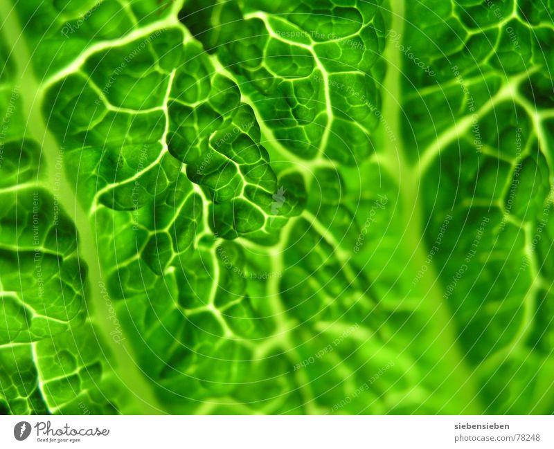 Fresh authentisch ökologisch rein Vitamin Composing Pflanze unverarbeitet Lebewesen Botanik Lebensmittel roh unbearbeitet Pflanzenteile Ernährung Lebenskraft