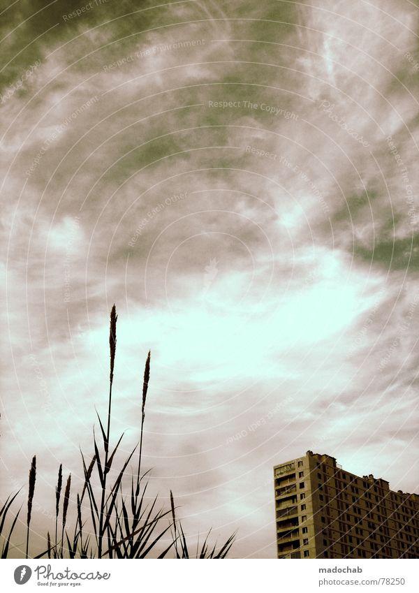 GEFRORENES BROT Himmel Natur Stadt Pflanze blau Wolken Haus Fenster Leben Architektur Gefühle Gras Gebäude Freiheit fliegen oben