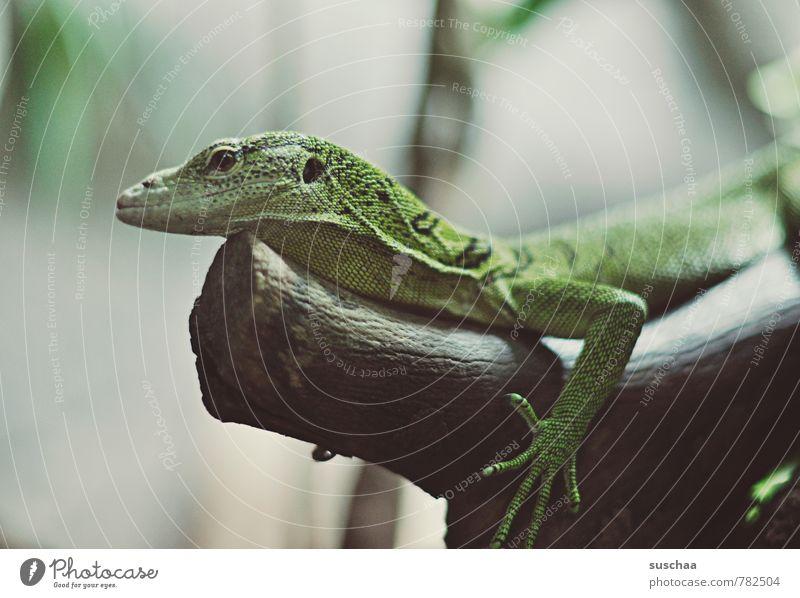 ein kleines grünes tierchen Tier Tiergesicht Krallen 1 Holz exotisch niedlich Echse Reptil Zoo Baumstamm Schuppen Farbfoto Detailaufnahme Textfreiraum links