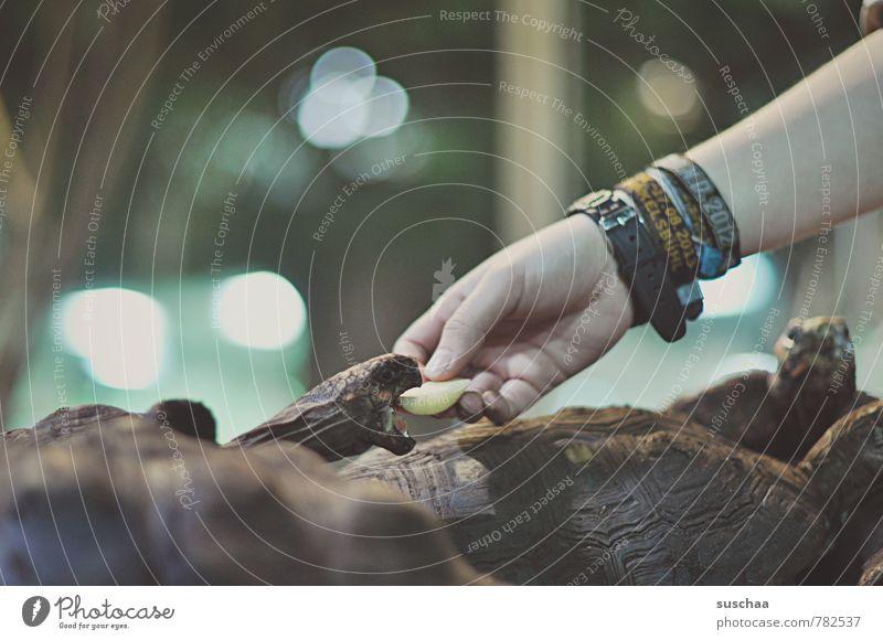 raubtierfütterung Arme Hand Finger Schuppen Zoo Tiergruppe Fressen füttern niedlich Appetit & Hunger gefräßig Maul Panzer Reptil Schildkröte Gedeckte Farben