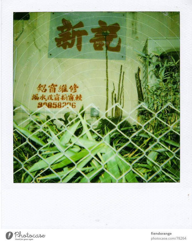 zaungast Zaun Hongkong grün Blatt kantonesisch flower street Zeichen Polaroid