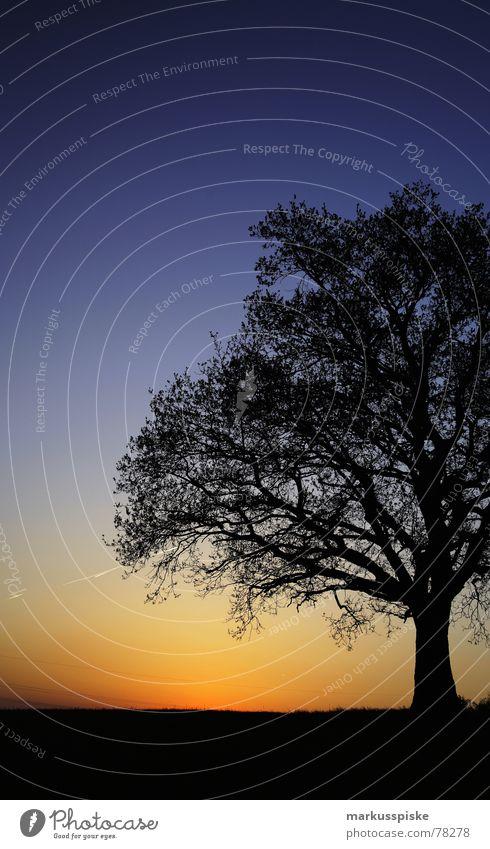 blau-schwarz-gelb Baum Sonnenuntergang Holz Wiese Idylle Himmel Ast Baumstamm Natur