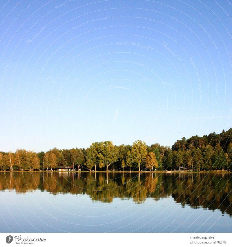 reflexion Natur Himmel Baum Sonne blau Wald Wiese Holz See Ast Idylle Baumstamm Schönes Wetter