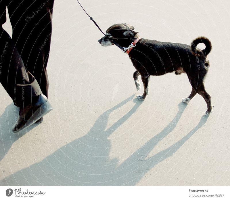 ...Schattenschwall... Hund stolzieren gehen trippeln Schwanz klein Gassi gehen Spaziergang Seil Beine elegant Straße Wege & Pfade