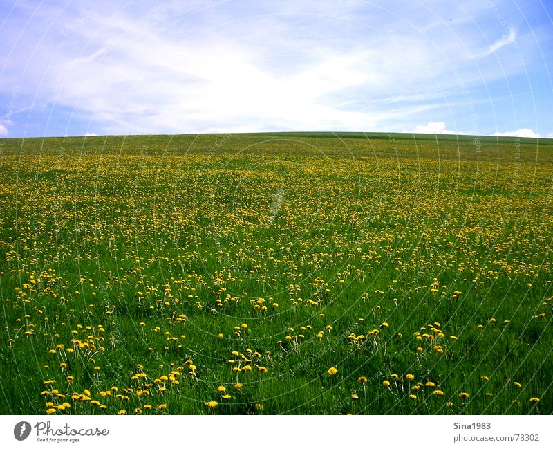 """Das """"X"""" Wiese grün Wolken weiß Löwenzahn Unendlichkeit Ferne Horizont Sommer Frühling gelb Blume Natur blau Himmel Blühend"""