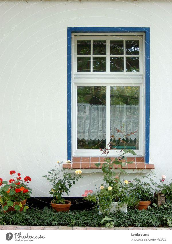 Inselblick Fenster Blume Blumentopf Bauernhof Rügen Hiddensee Stillleben gemütlich Außenaufnahme blau keine besondere ausleuchtung