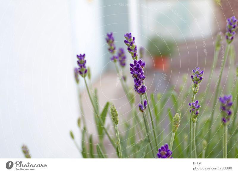 Topf an Kopf Ferien & Urlaub & Reisen grün Pflanze Sommer Erholung Blume ruhig Leben Frühling Blüte Glück Garten Zufriedenheit Wachstum Geburtstag Ausflug