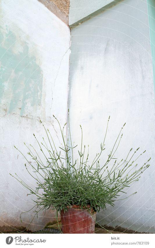 textfreiraum | wir blühen auf Ferien & Urlaub & Reisen Pflanze Sommer Blume Erholung ruhig Wand Frühling Gesundheit Glück Garten Feste & Feiern Fassade