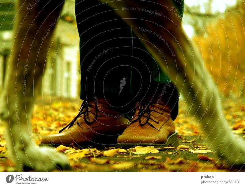 Hyänen im Stadtpark Blatt Herbst Wege & Pfade Hund Park Schuhe gefährlich stehen bedrohlich Spaziergang Stiefel Pfote Wolf Schuhbänder Biest
