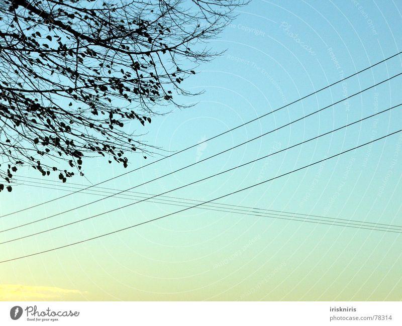 Luftkontakte Draht Herbst Dämmerung Kabel Elektrizität Leitung gekreuzt Abend Baum Blatt kalt Mischung Abenddämmerung Natur