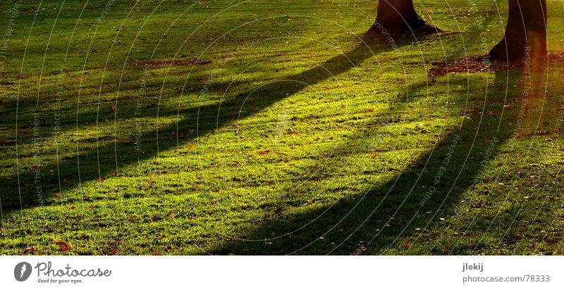 Sundown Shadow Baum Park grün Wiese Gras Wachstum Herbst Schatten Gegenlicht Sonnenuntergang Abend Nachmittag Garten Lichtfleck autumn trees shadow afternoon
