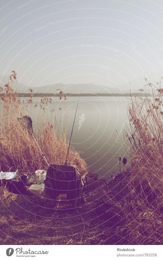 Lass uns angeln Umwelt Natur Landschaft Tier Erde Wasser Himmel Wolkenloser Himmel Sonnenlicht Schönes Wetter beobachten fangen genießen hängen Angeln Angelrute