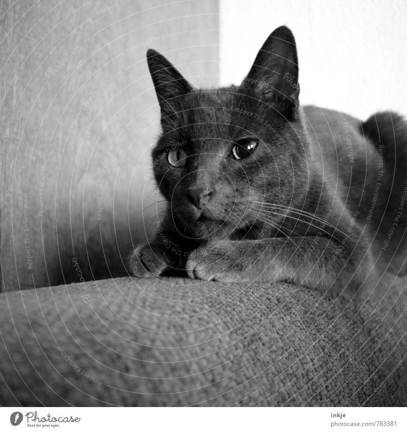 Dorn im Auge Tier Haustier Katze Tiergesicht Hauskatze 1 hocken Blick außergewöhnlich Krankheit Mitgefühl achtsam Wachsamkeit Traurigkeit Sorge Augenheilkunde