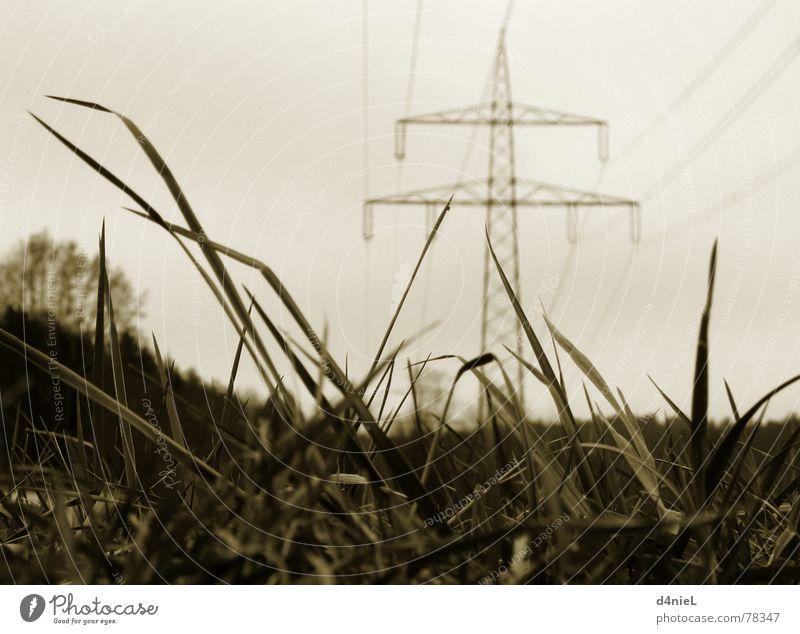 Ökostrom Natur Himmel ruhig Herbst Wiese Gras Industrie Hoffnung Elektrizität Technik & Technologie Kabel Strommast Leitung elektronisch Sepia Elektronik