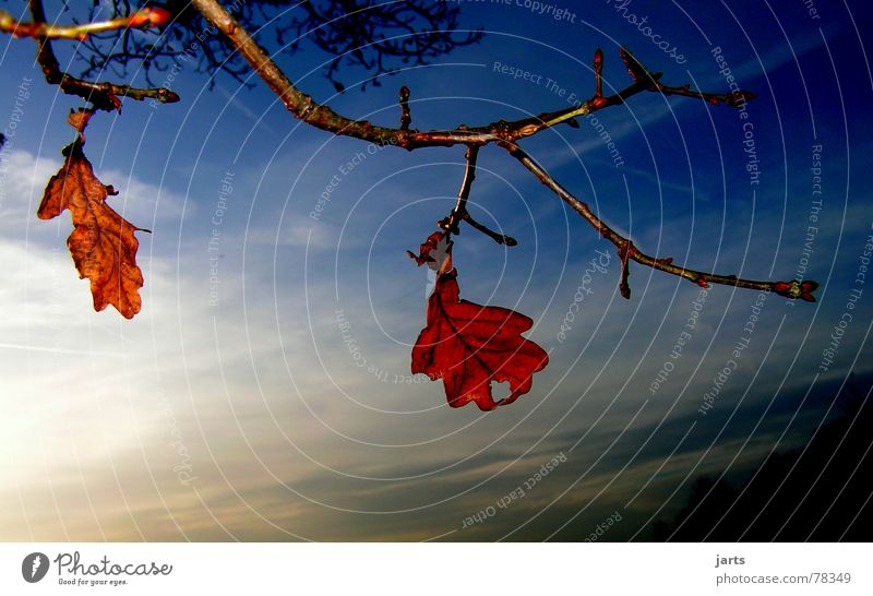 zwei allein vergessen Blatt Herbst Baum Wolken Einsamkeit Himmel Abend Ast jarts