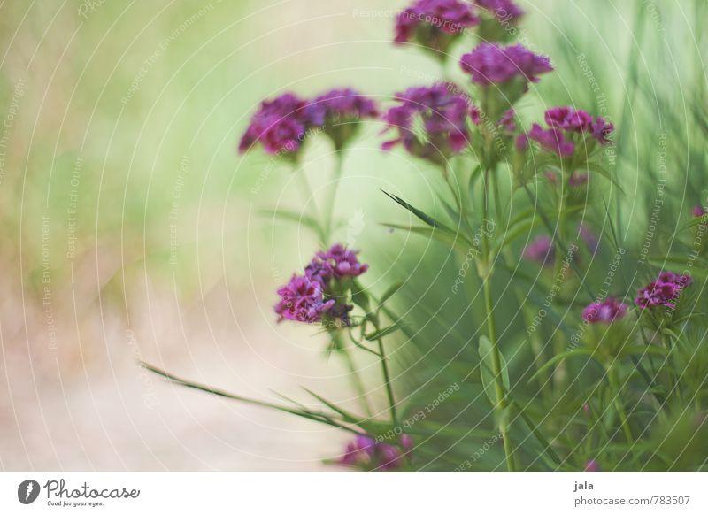 . Natur Pflanze schön Blume Umwelt Gras Blüte Garten ästhetisch