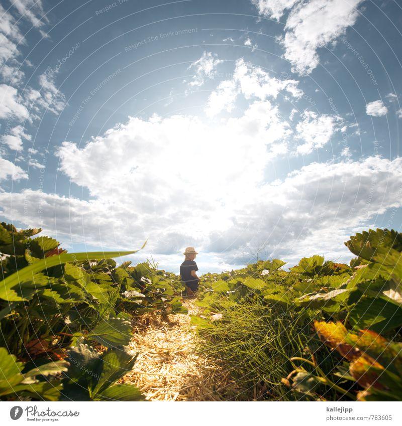 strawberry fields forever Mensch Himmel Kind Natur Pflanze Sommer Sonne Landschaft Wolken Blatt Tier Umwelt Junge Feld Wachstum Kindheit