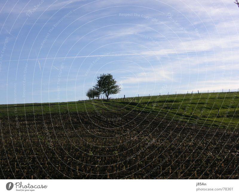 Stoppelfeld Feld Baum grün braun Wiese Wolken Außenaufnahme Wege & Pfade Landschaft blau Freiheit