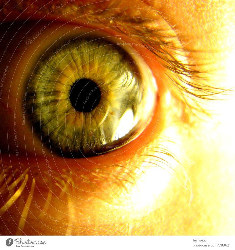 the all seeing I Mensch grün schön schwarz Auge gelb gold Angst Haut glänzend beobachten entdecken Momentaufnahme Panik Wimpern Selbstportrait