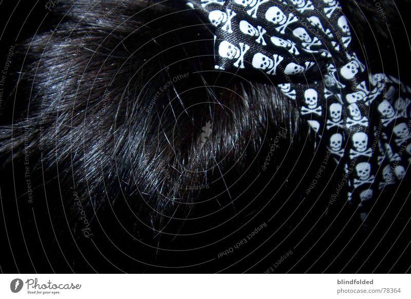 der dicki hat gebuuuurtstag!!!!! ~geschenk~ schwarz dunkel glänzend laut Schleife Schädel Haarreif Findet Nemo
