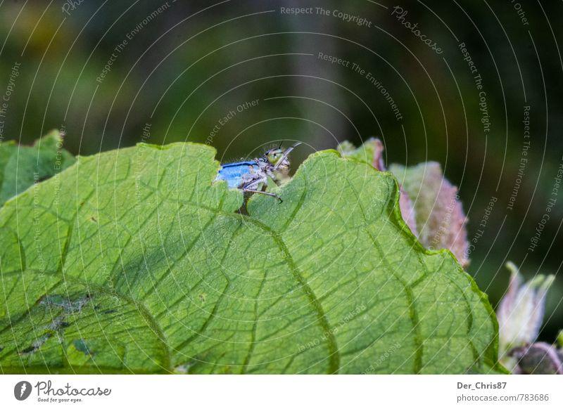 Keine Fotos bitte! ;-) Natur Sommer Blatt Tier Wald Umwelt natürlich außergewöhnlich fliegen elegant Wildtier ästhetisch Schutz exotisch Scham Schüchternheit